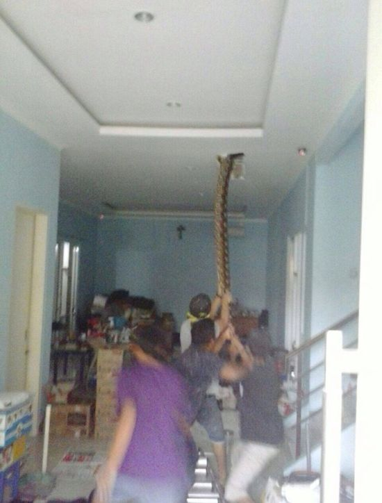 People Find Huge Snake Inside Of Their Home (3 pics)