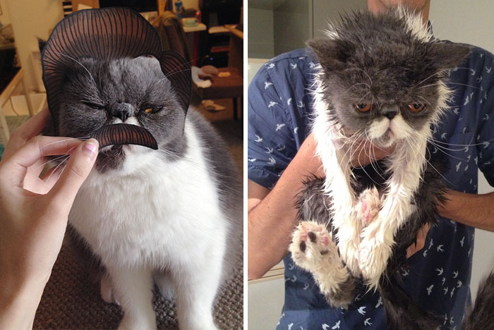 Cats And Baths Just Do Not Mix (21 pics)