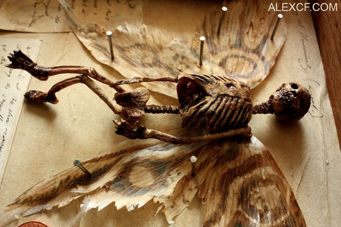 Old Bodies From Strange Creatures Were Discovered In A London Basement (23 pics)