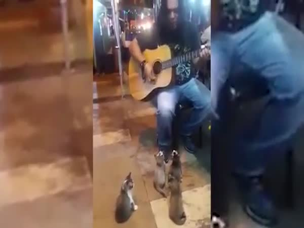 Busker Performing To Group Of Kittens In Malaysia