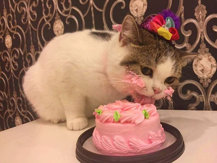 Adorable Cat Eats Cake For His Birthday (4 pics)