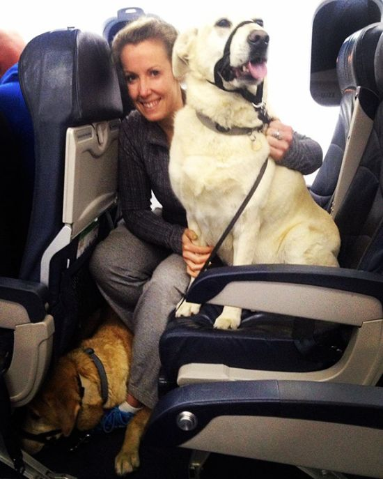 Canadian North Airlines Is Letting People Fly With Their Pets (9 pics)