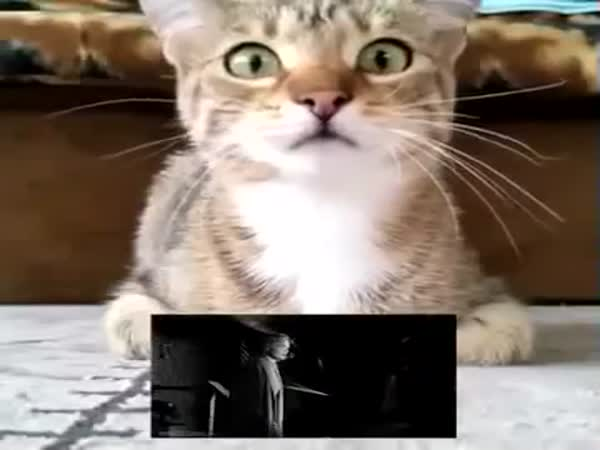 Cat Watches Psycho