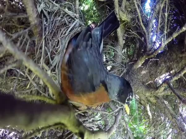 Incredible Time Lapse Of Birds Nest