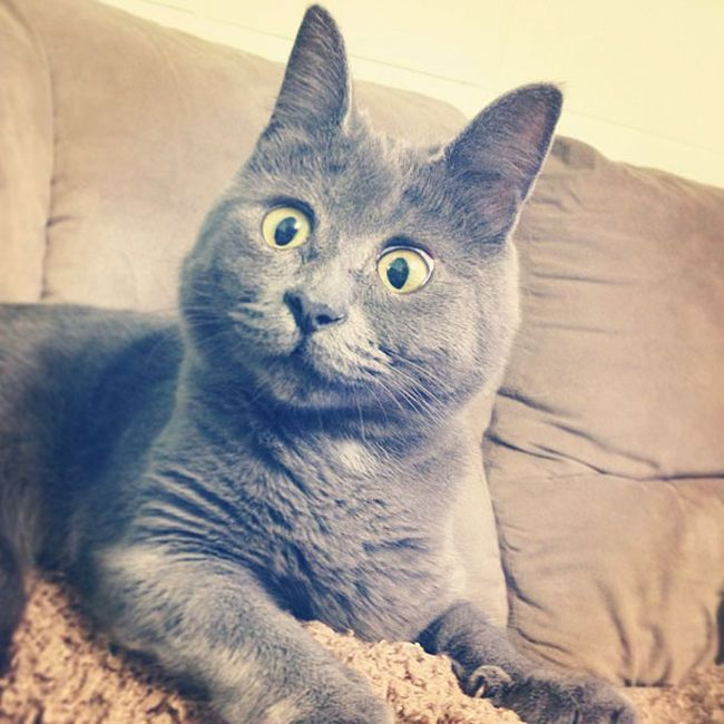 This Cat's Face Makes Him Look Like He's Permanently Surprised (14 pics)