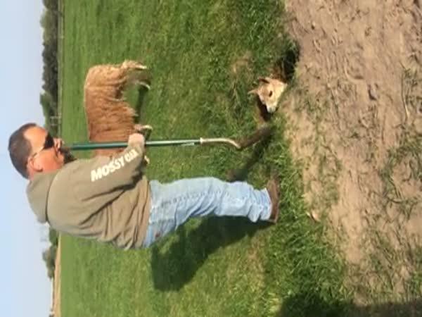 Alpaca Rescue