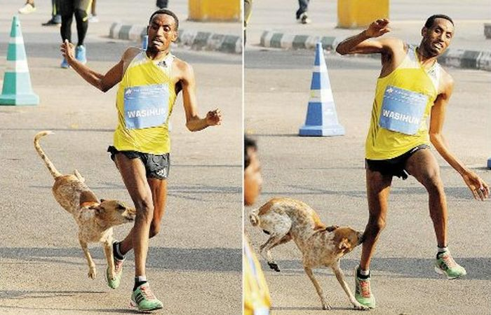 Marathon Runner Loses The Race And Gets Attacked By A Dog (2 pics)