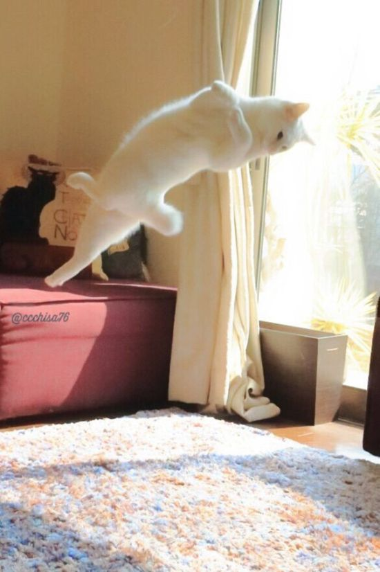 Ballet Cat Dances Like It's Never Danced Before (8 pics)