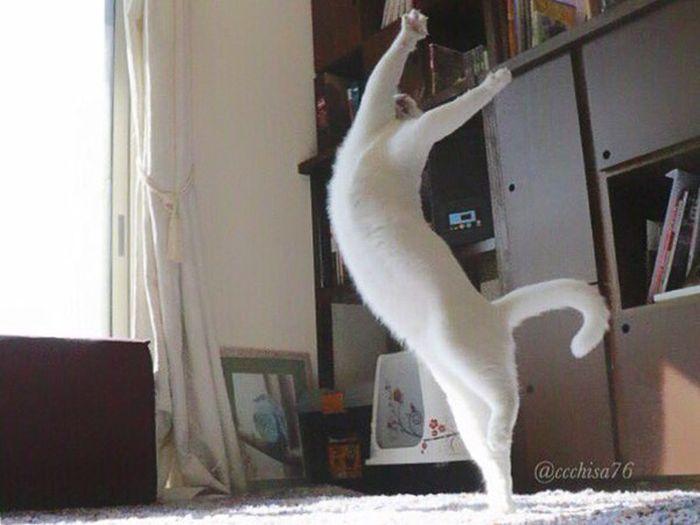 Ballet Cat Dances Like It's Never Danced Before (8 pics)