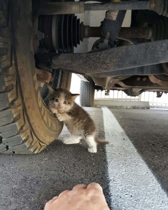 Guy Gives Scared Kitten A Forever Home After Finding Her Under A Truck (4 pics)
