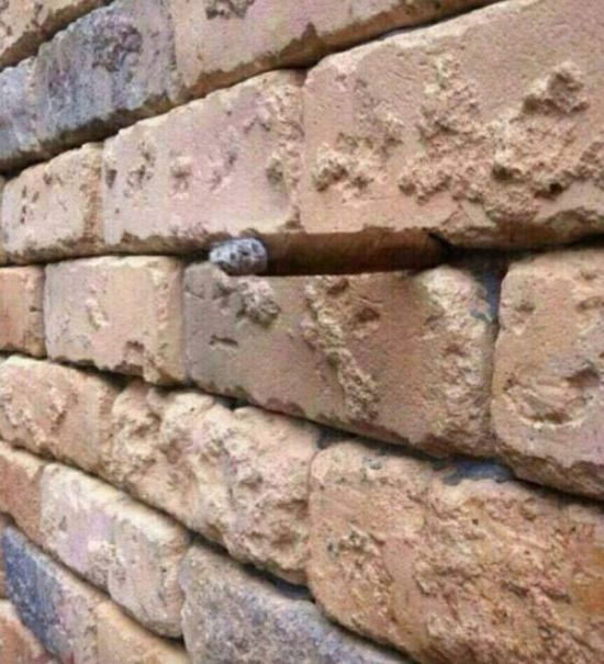 See If You Can Spot The Optical Illusion That's Hiding In Plain Sight (5 pics)