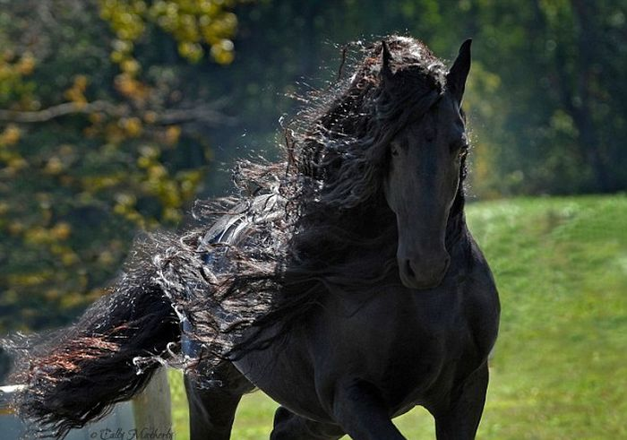 Frederik The Horse Has The World's Most Majestic Mane (6 pics)