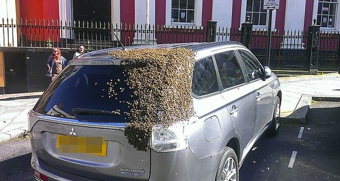 Massive Swarm Of 20,000 Bees Follows Car For Two Days Straight (5 pics)
