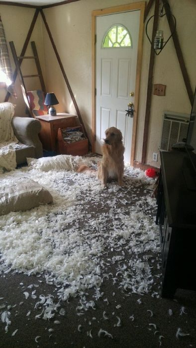These Dogs Look Very Suspicious (7 pics)