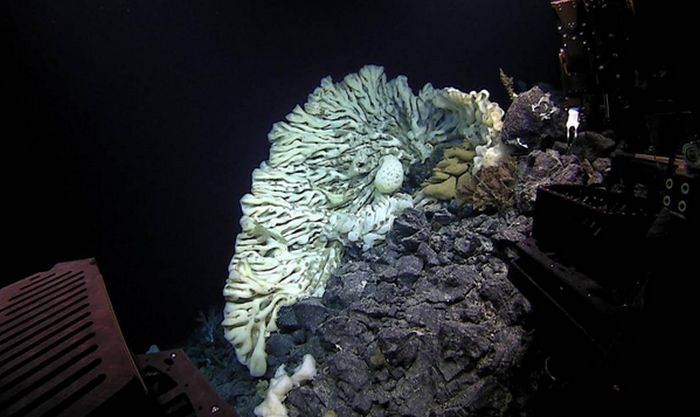 Divers Discover World's Largest Sea Sponge In Hawaii (3 pics + video)