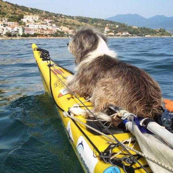 This Man Is Kayaking The Mediterranean Sea With A Dog As His Compation (12 pics)