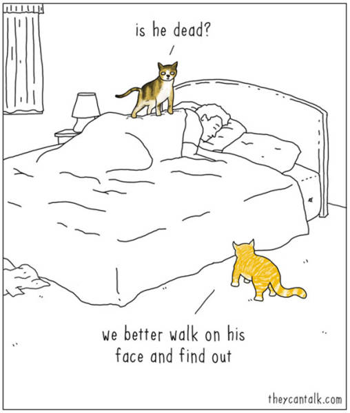 What Animals Would Probably Say If They Could Talk (30 pics)
