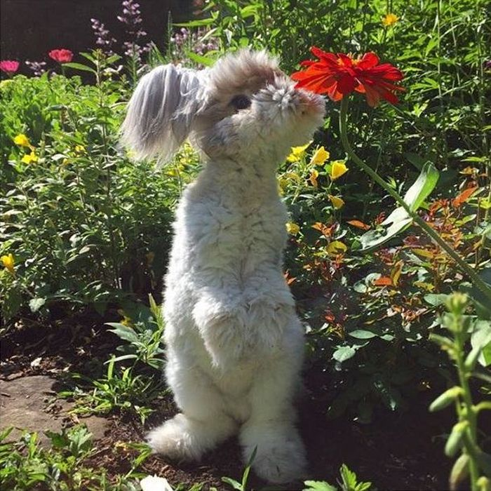 There's A Reason Why This Fluffy Bunny Is Instagram Famous (10 pics)