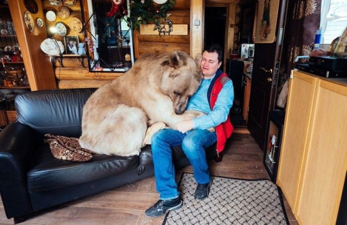 Russian Couple Keeps Gigantic Bear As A Pet (9 pics)