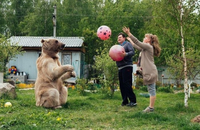 Russian Couple Keeps Gigantic Bear As A Pet (9 pics)