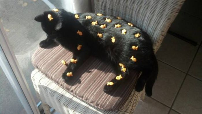 Amusing Photos That Will Please All The Cat Lovers Out There (41 pics)