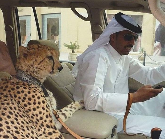 Dubai Is The Craziest Place On Earth And These Photos Prove It (30 pics)