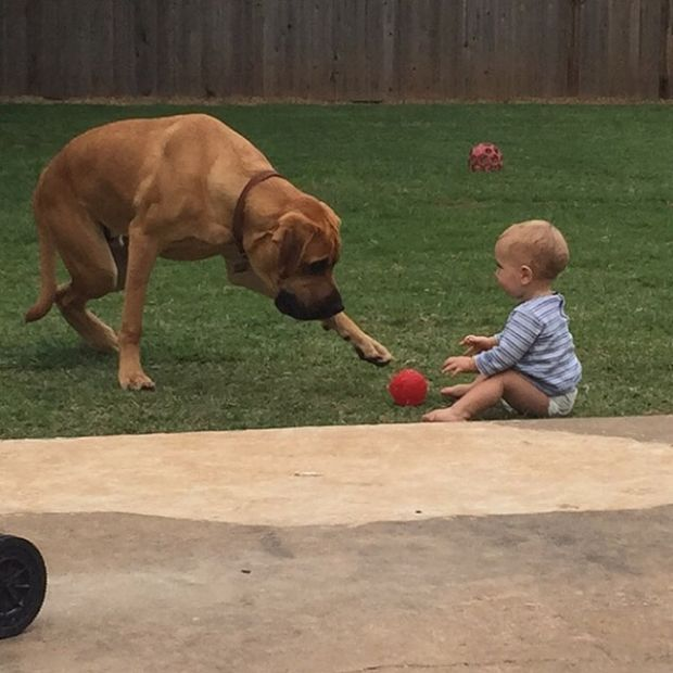 Dogs Will Forever Be Man's Best Friend (17 pics)
