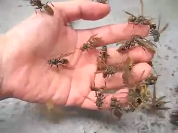 Wasp In The Hand