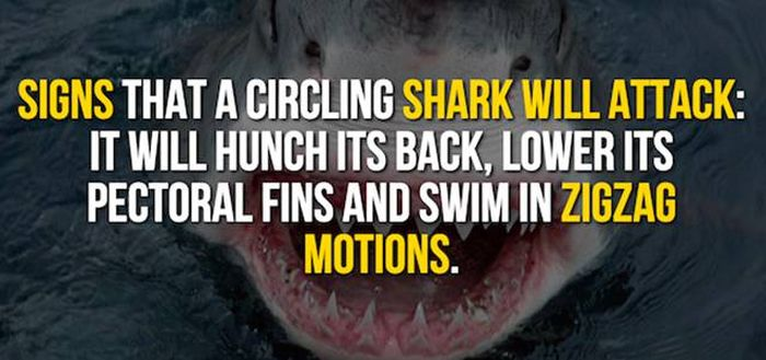 Exciting Shark Facts From The Depths Of The Ocean (14 pics)