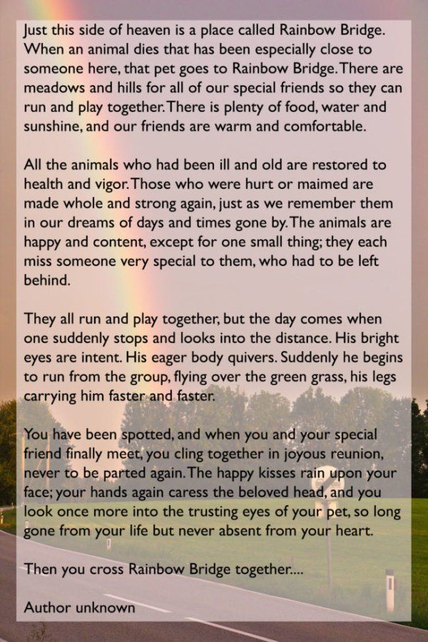 This Man's Goodbye Letter To His Dog Will Break Your Heart (2 pics)