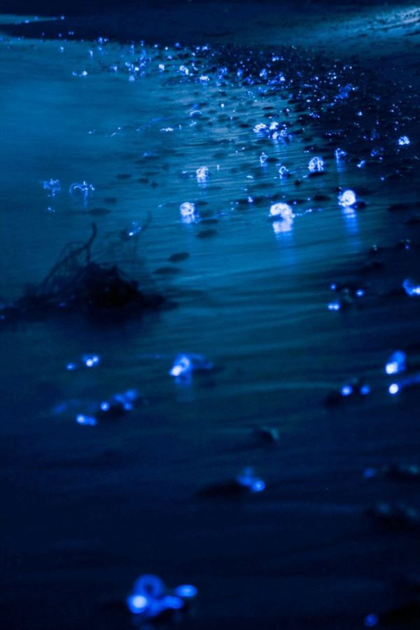 A Photographer Captured Stunning Photos Of The Glowing Sea In Japan (4 pics)