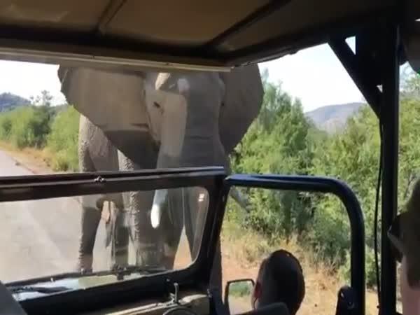 Elephant Runs After A Car