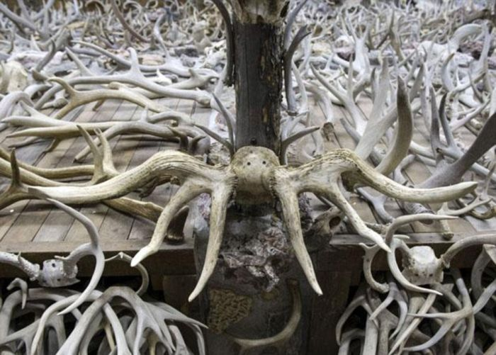 Over 15,000 Antlers Are Stashed Away Inside This House (8 pics)