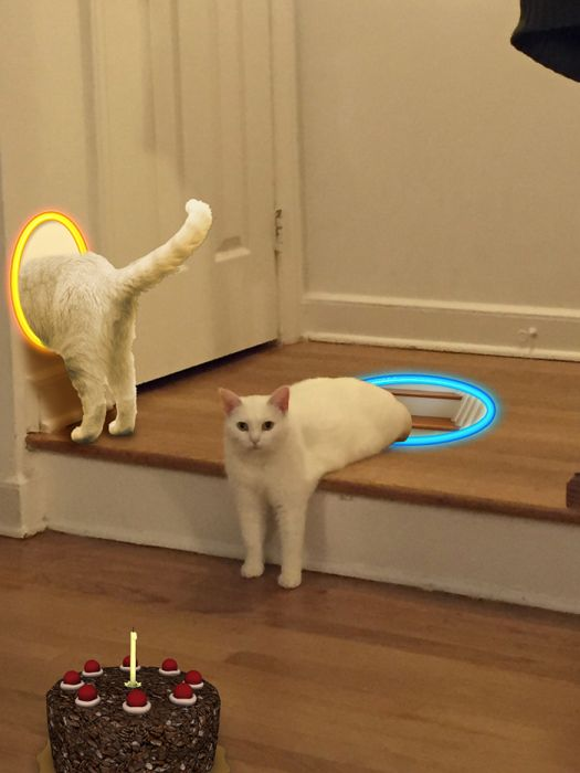 Cat Gets Caught Up In A Photoshop Battle (15 pics)