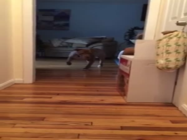 Pit Bull Quietly Tries To Tip Toe Past Sleeping Cat