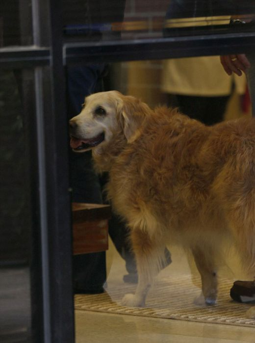 The Last Surviving Search Dog From 9/11 Has Passed Away (10 pics)