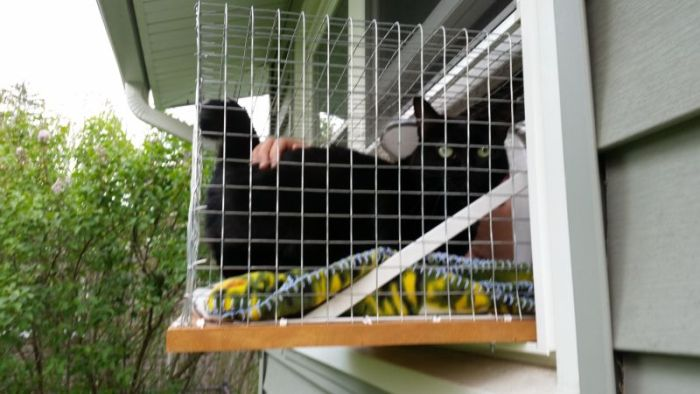 Owner Builds The Perfect Kitty Cage For Their Cat (9 pics)