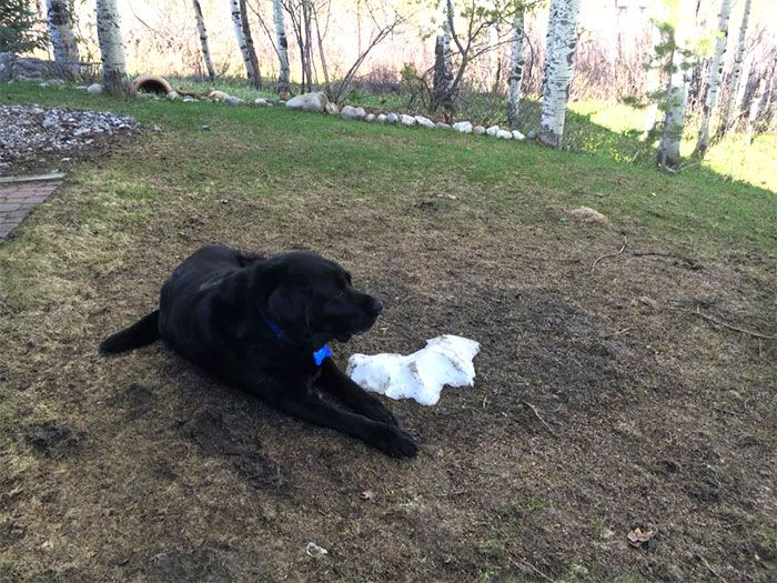 Dog Just Doesn't Want To Say Goodbye To The Snow (8 pics)