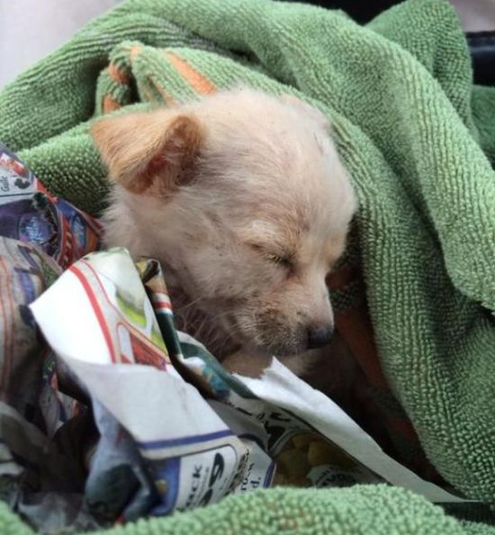 Pumpkin The Rescue Dog Gets A Second Chance At Life (9 pics)