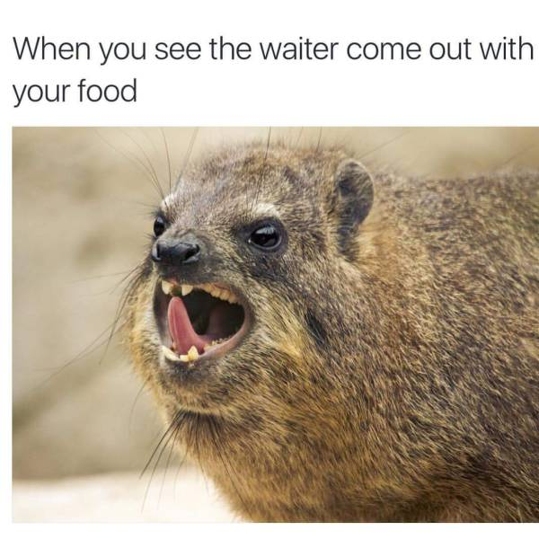 Hilarious Memes That Will Make You Laugh When You Need It Most (41 pics)