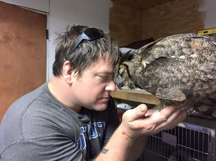 Owl Sincerely Thanks The Man Who Rescued Her (4 pics)