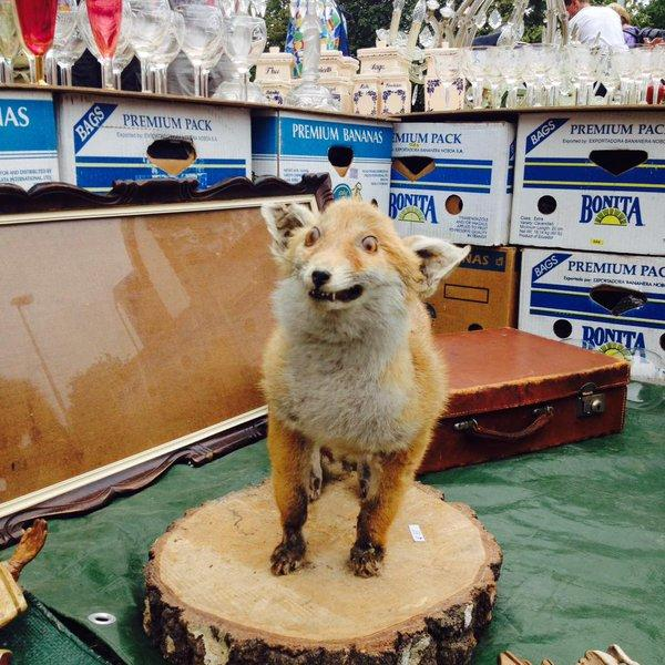 What It Looks Like When Taxidermy Goes Wrong (19 pics)