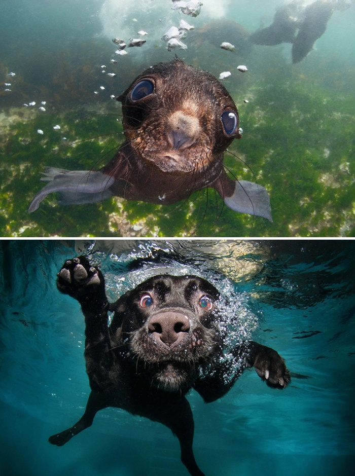 Dogs And Seals That Look Way Too Much Alike (20 pics)