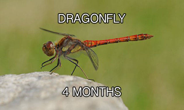 Looking At The Life Spans Of Different Animal Species (24 pics)
