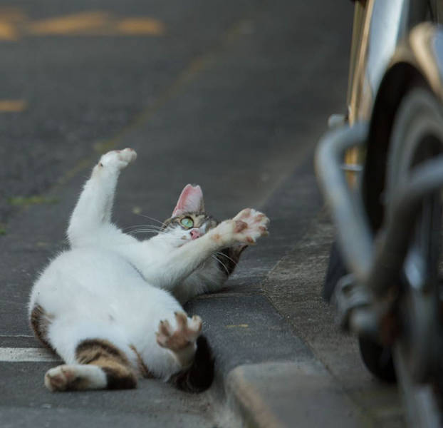 Cute Stray Cats From The Streets Of Tokyo (47 pics)