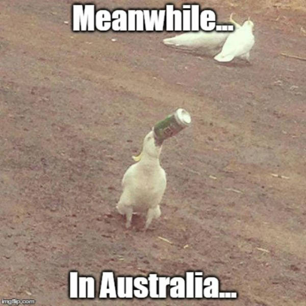 Things Are A Lot More Intense In Australia (43 pics)
