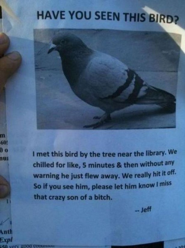 The Funniest And Most Pointless Flyers Ever Printed (20 pics)