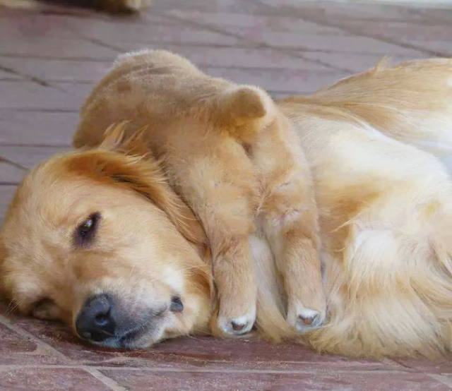 Pictures Of Animals That Capture What It's Like To Be A Mom (40 pics)