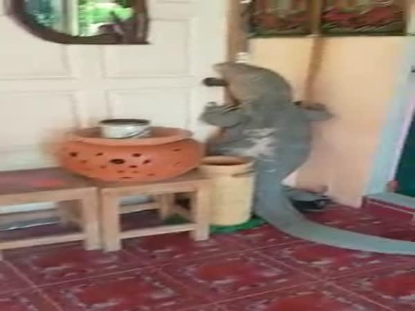 Man Catches Monster Lizard