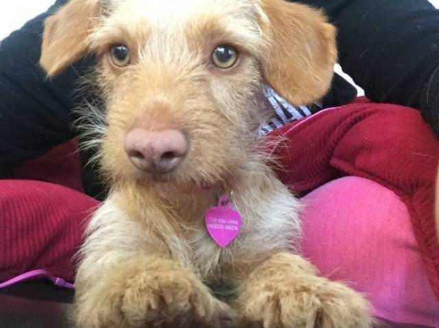 Mixed Breed Dogs That Are Undeniably Cute (19 pics)